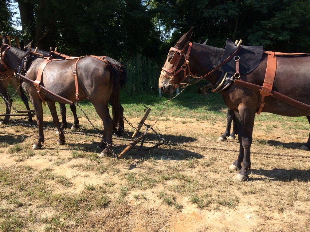 20 mule team borax wagons go to washington dc 4th of july parade 2017 carriage for 20 mule team borax swimming pools